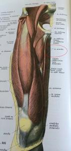 De gracilis spier zal getransplanteerd worden naar m'n wangen.